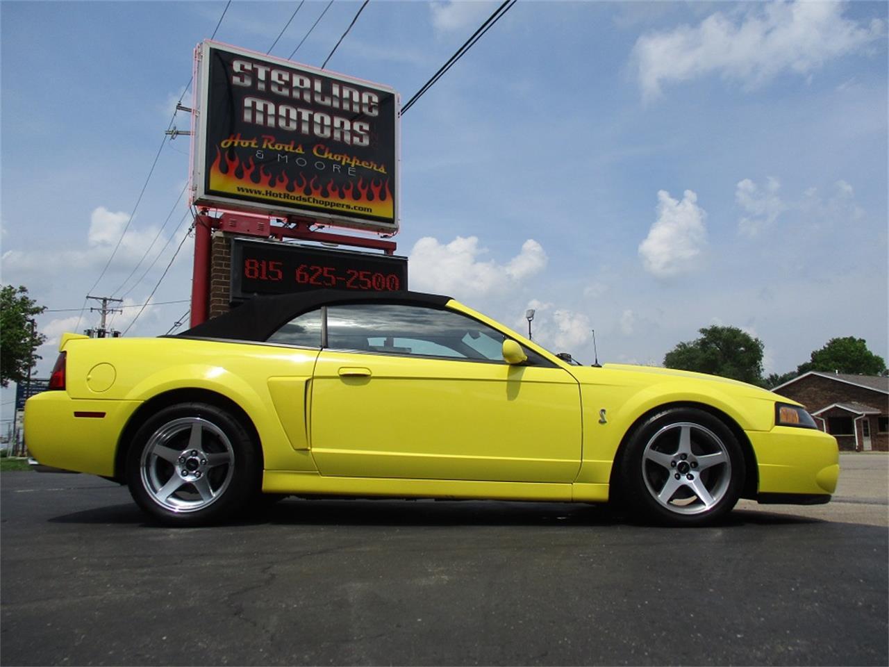 Mustang Terminator Cobra For Sale