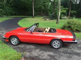 1983 Alfa Romeo 2000 Spider Veloce (CC-1263819) for sale in Carlisle, Pennsylvania