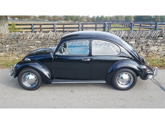 1965 Volkswagen Beetle (CC-1303938) for sale in Lexington, Kentucky