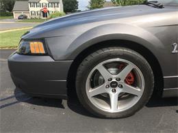 2003 Ford Mustang SVT Cobra (CC-1304069) for sale in MOUNT JOY, Pennsylvania