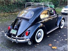 1961 Volkswagen Beetle (CC-1300800) for sale in Seattle, Washington