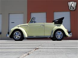 1966 Volkswagen Beetle (CC-1362760) for sale in O'Fallon, Illinois