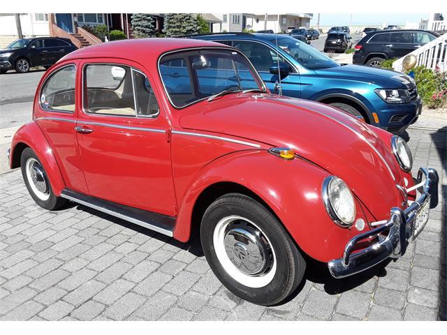 1966 Volkswagen Beetle (CC-1360544) for sale in Lavallette, New Jersey