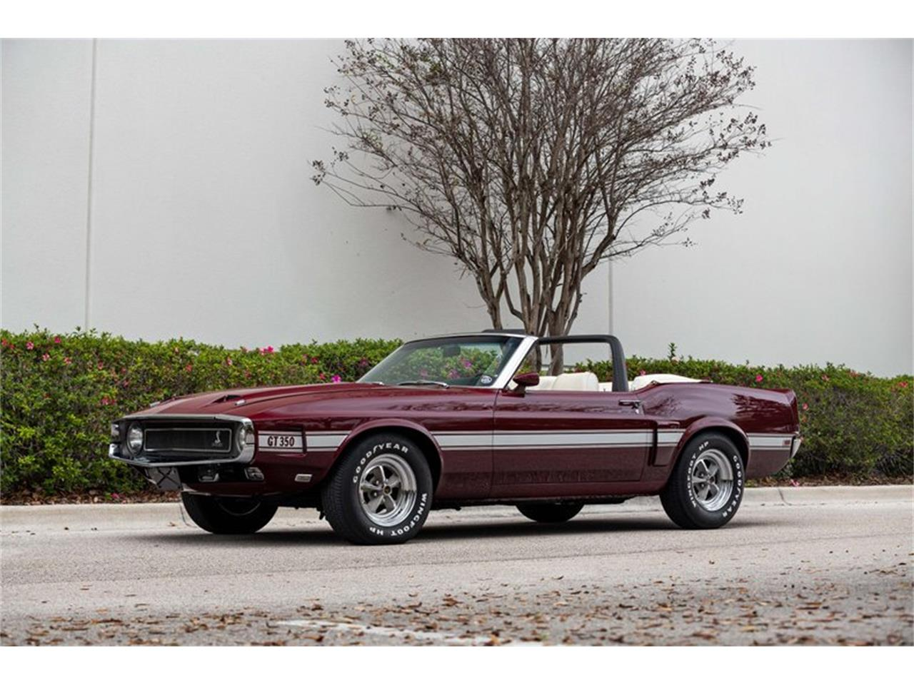 1969 Shelby GT350 (CC-1411940) for sale in Orlando, Florida