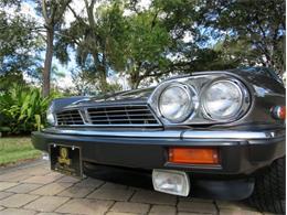 1989 Jaguar XJS (CC-1419896) for sale in Lakeland, Florida