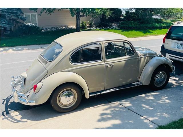 1967 Volkswagen Beetle (CC-1507216) for sale in Denver, Colorado