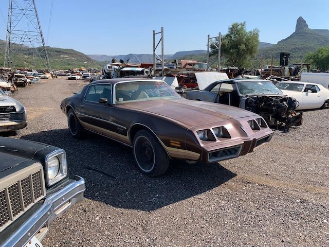 1979 Pontiac Firebird (CC-1517037) for sale in Phoenix, Arizona