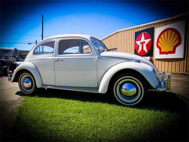 1964 Volkswagen Beetle (CC-1532723) for sale in Leeds, Alabama